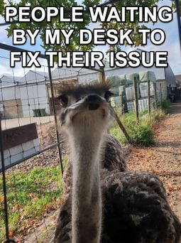 "A curious ostrich. ""People waiting by my desk to fix their issue"""